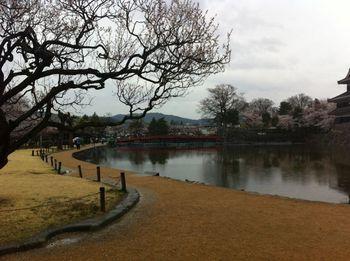 matsumotosakura27.jpg